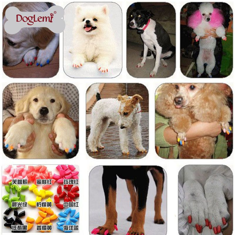 Cheap dog skin, Buy Quality dog training directly from China dog ...