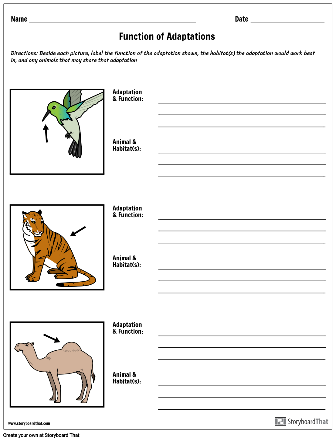 Animal Adaptations Worksheet In