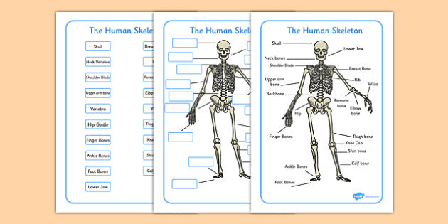 human skeleton labelling sheets (common names) - human skeleton, Skeleton