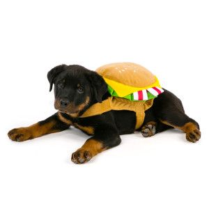 Top Paw Pet Halloween Hamburger Costume Costumes Petsmart