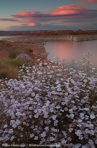 Sunset last night at Lake Powell, near Page, Arizona.