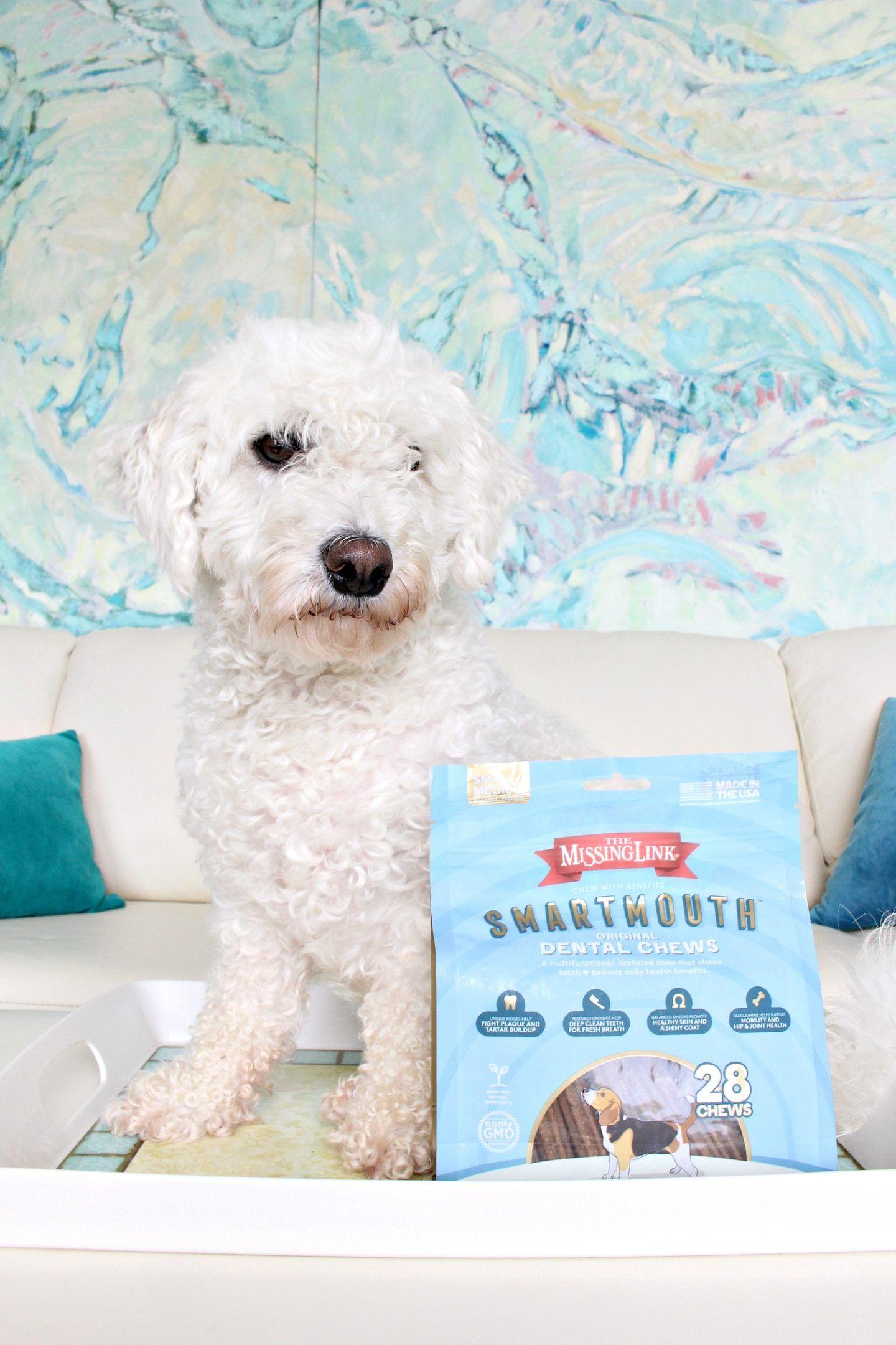 The Missing Link Pet Kelp Formula Skin And Coat Limited Ingredient Superfood Supplement For Dogs 8 Oz For More Informat Dog Supplements Pets Cat Health