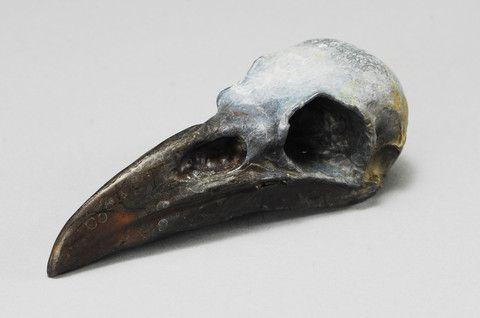 Raven Skull | Dan Chen - Nature and Wildlife Artist