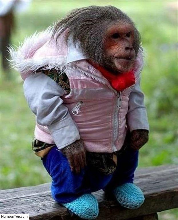 Photo rigolote d 39 un petit singe qui porte des v tements de b b b b singe pinterest photo - Petit singe rigolo ...