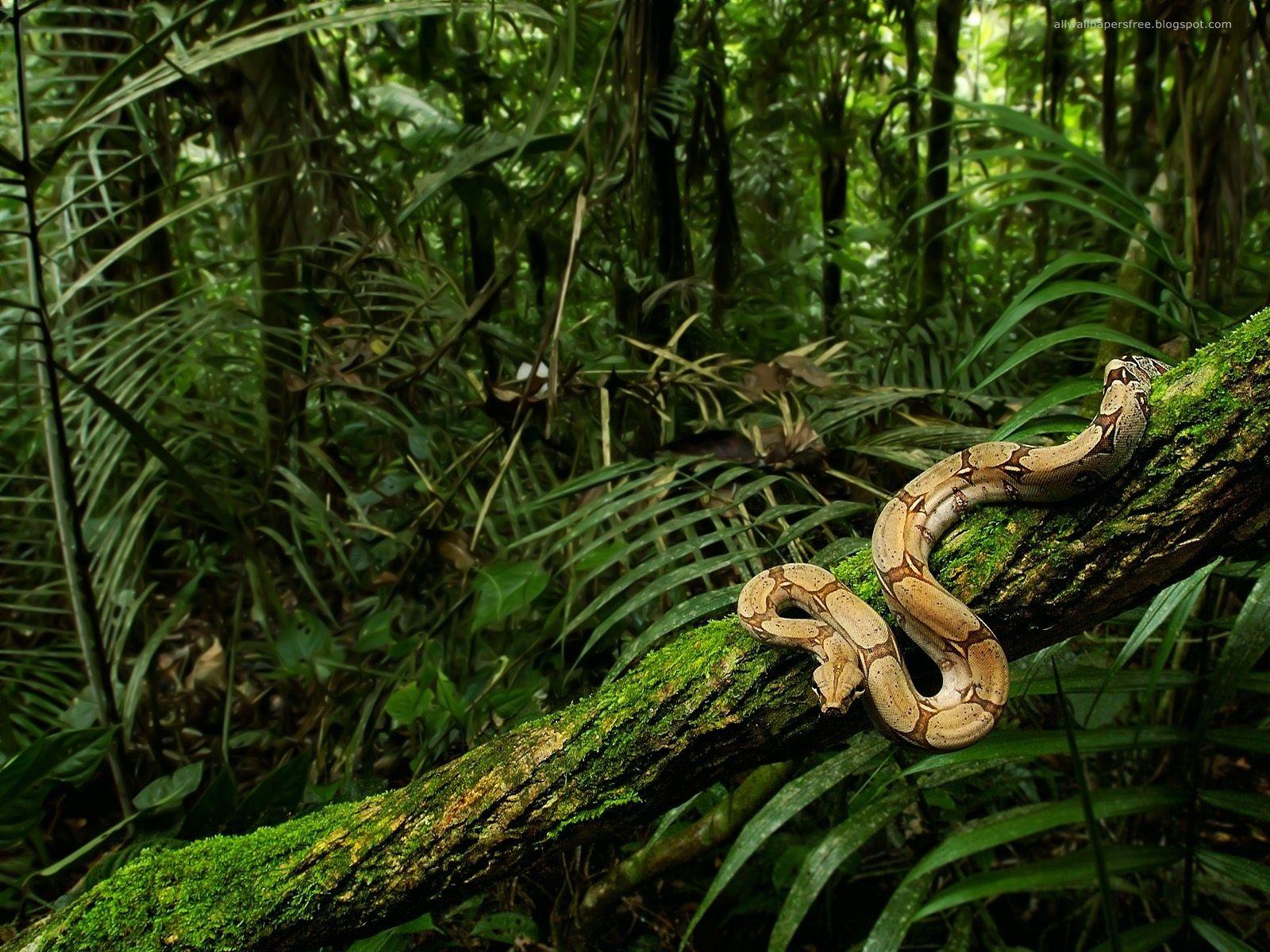 Wildlife Images Wildlife Hd Wallpaper And Background Photos 21003832 Congo Rainforest Rainforest Animals Jungle Forest