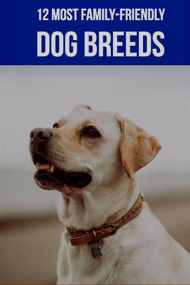 Dog Training Clicker And Treat Bag Dog Training X Pens Dog