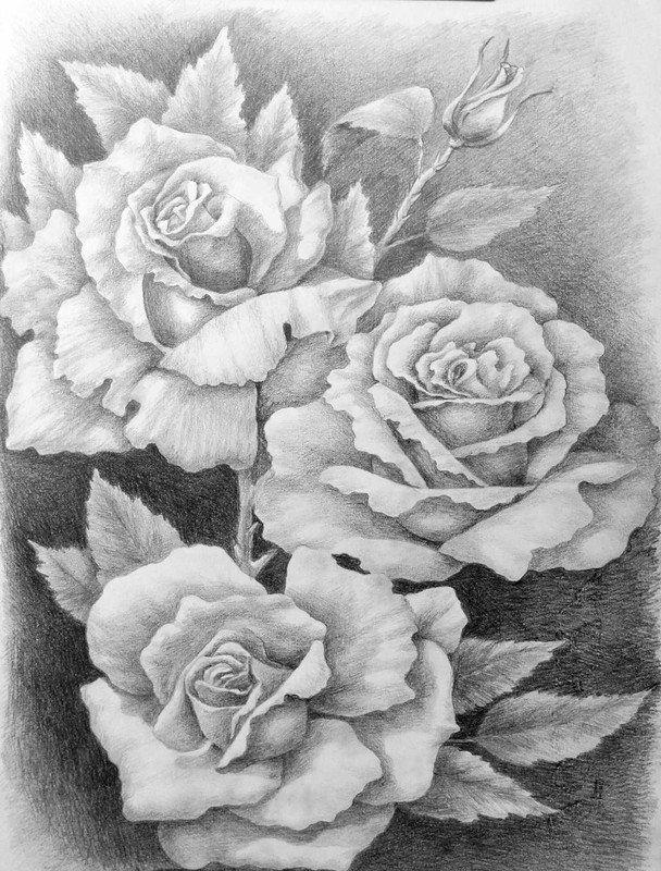 роза карандашом фото практика