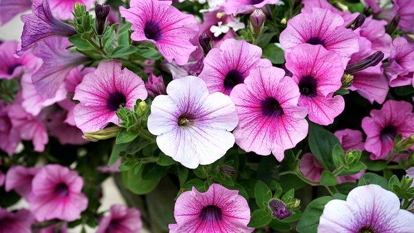 Kwiaty Rozowy Rozowe Kwiaty Organic Horticulture Organic Gardening Gardening Advice