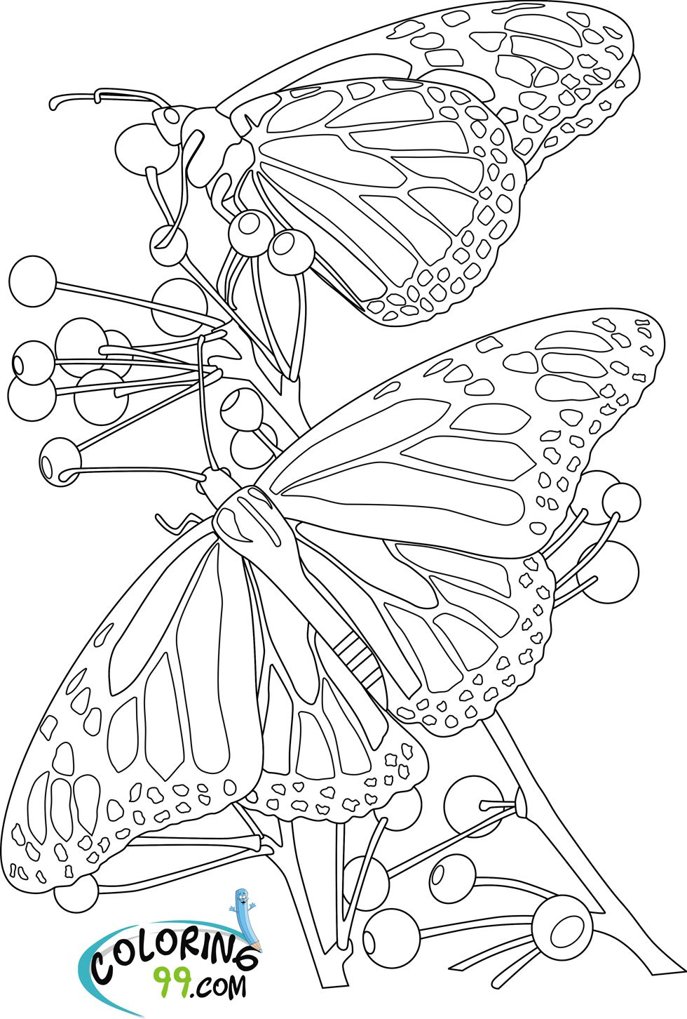 Butterfly with Flowers Coloring Pages You have read this