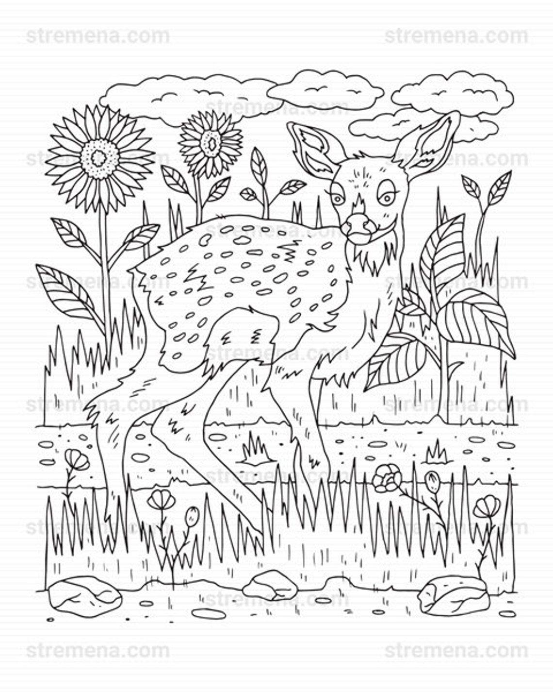 Woodland Deer Printable Coloring Pages Pdf Etsy Coloring Books Coloring Pages Animal Coloring Books