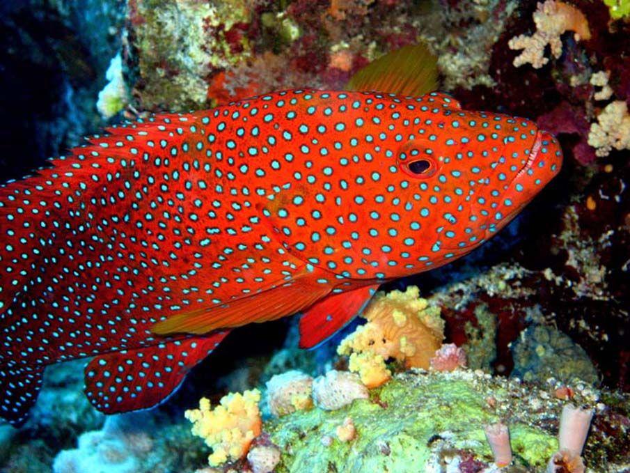50 fotografias surpreendentes xii peixes coloridos for Colorful tropical fish