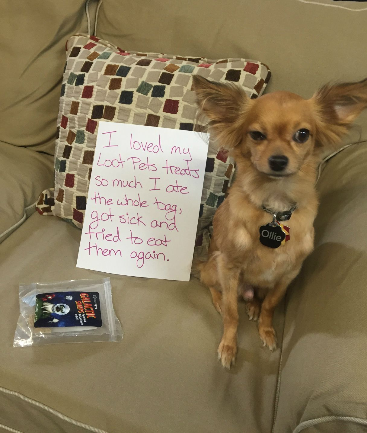 Loosin Your Loot Dog Shaming Loot Dog Pictures