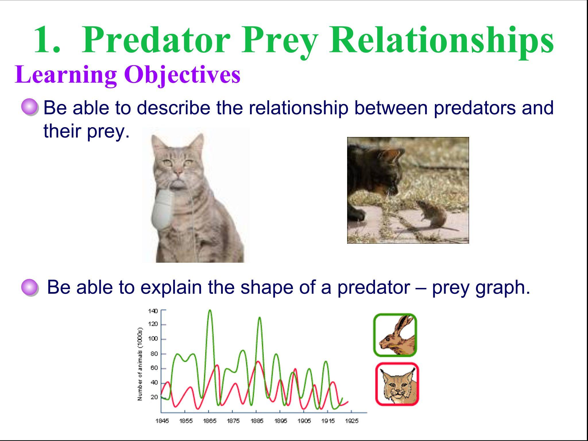 Predator Prey Relationship Worksheet