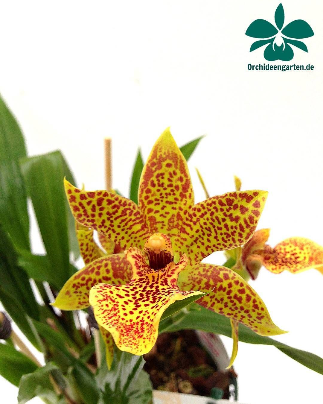 Pin By Richard Sanders On Orchids Pinterest Flowers Plants And