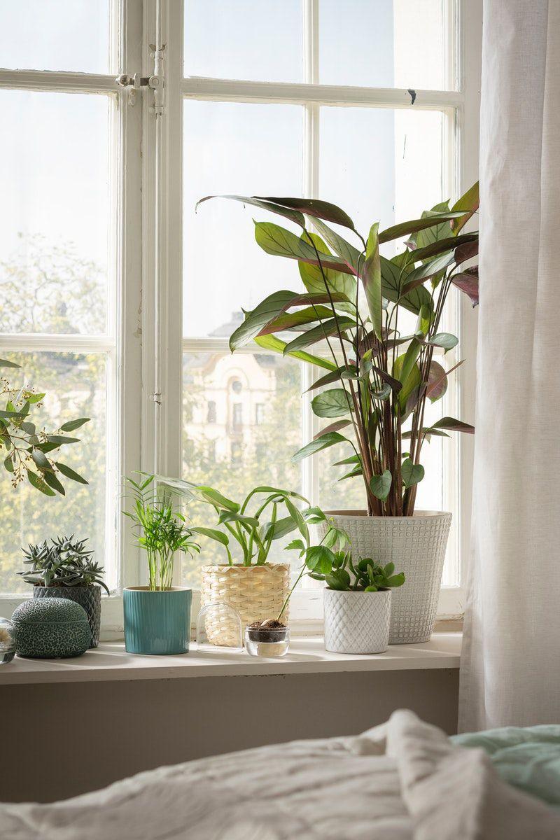 Pflanzen Deko im Schlafzimmer
