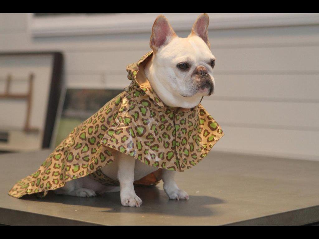 Oh My Love The New Martha Stewart Raincoat For Pups At Petsmart