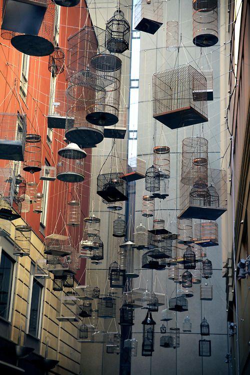 Bird cages - Installation Sidney