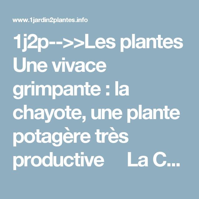 Chayote Le Fruit D Une Plante Grimpante Sa Culture