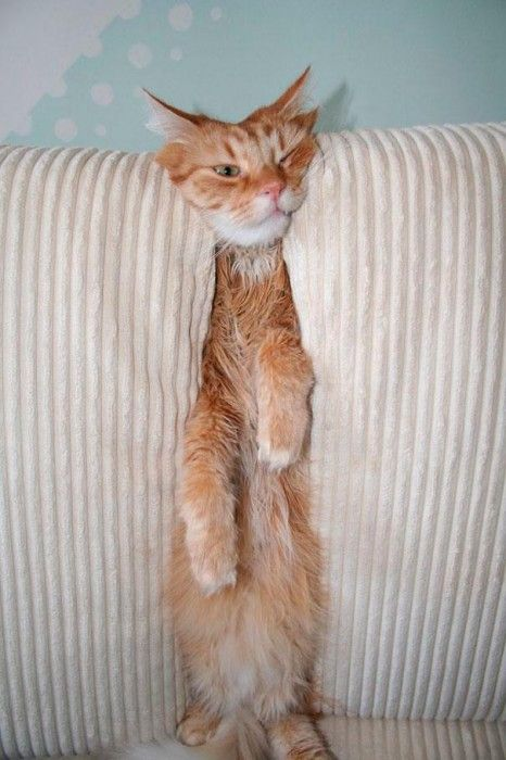 Funnycatsdogsstuckfurniture Animals Pinterest Sticks - 32 adorable animals
