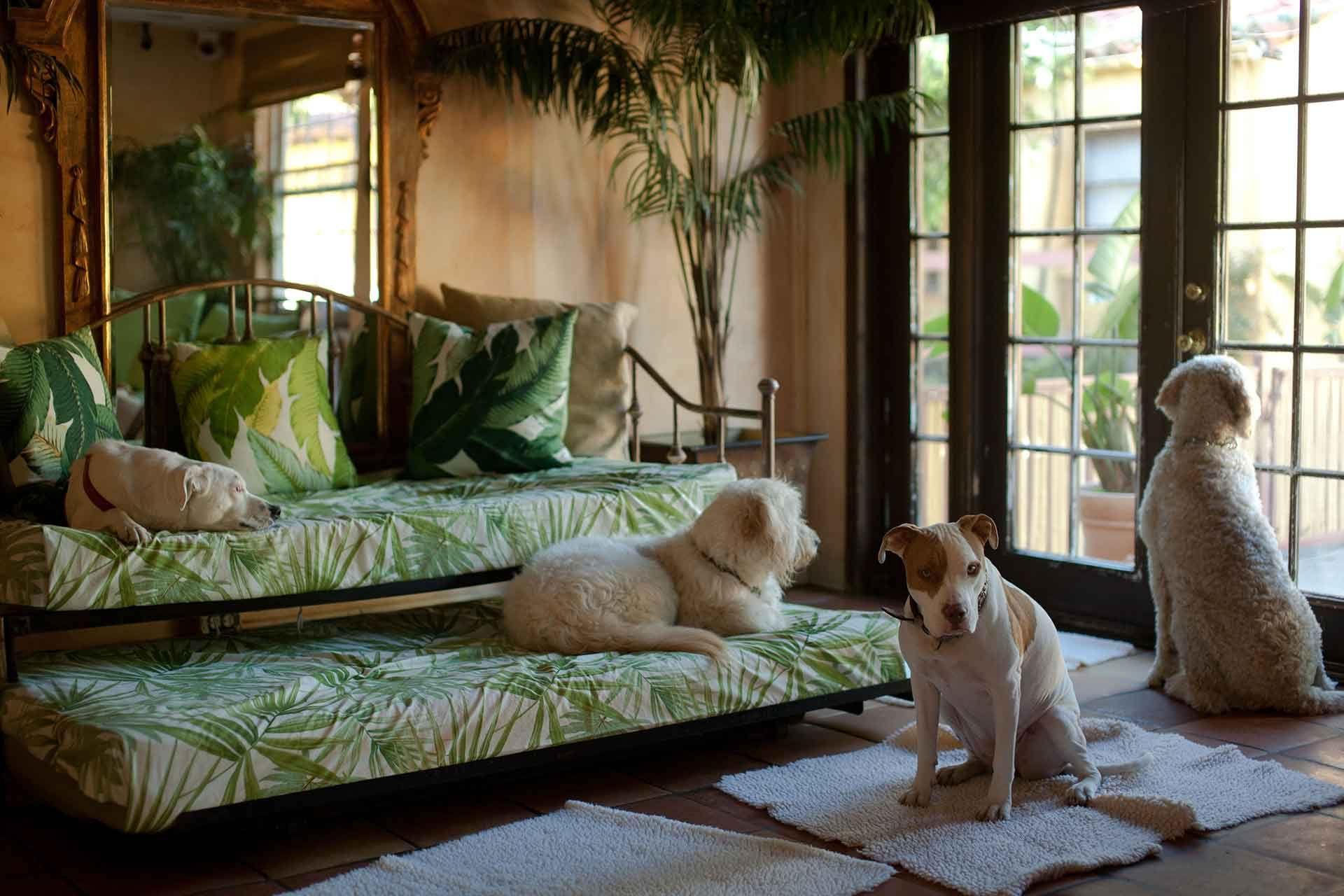 Paradise Ranch Pet Resort CageFree Dog Boarding in Los