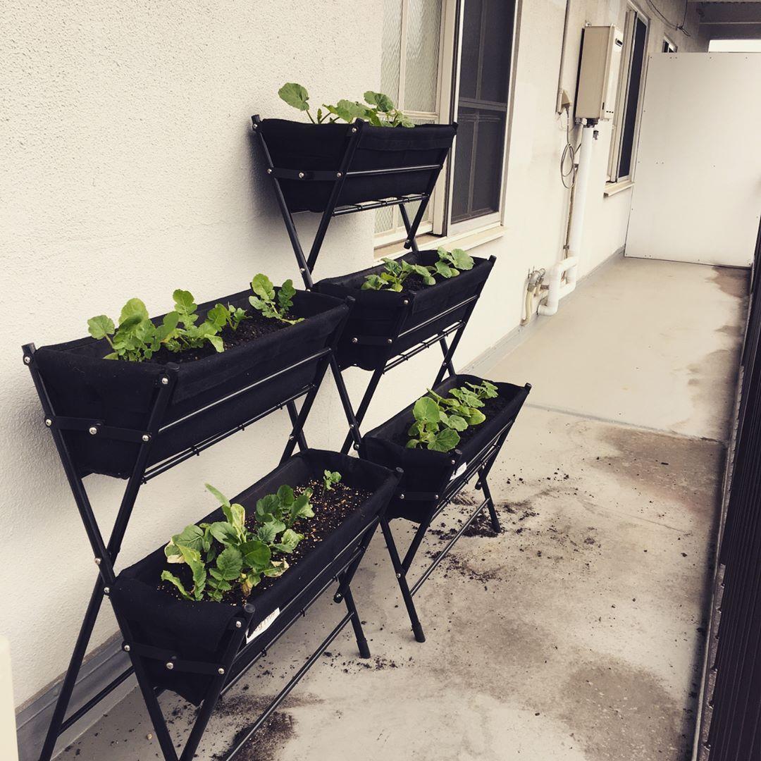 Azusaさんはinstagramを利用しています 無農薬で野菜を育てること