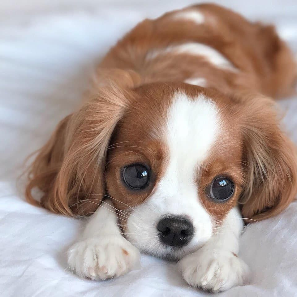 Those Eyes | Cute baby dogs, Cute animal pictures, Cute puppy pictures