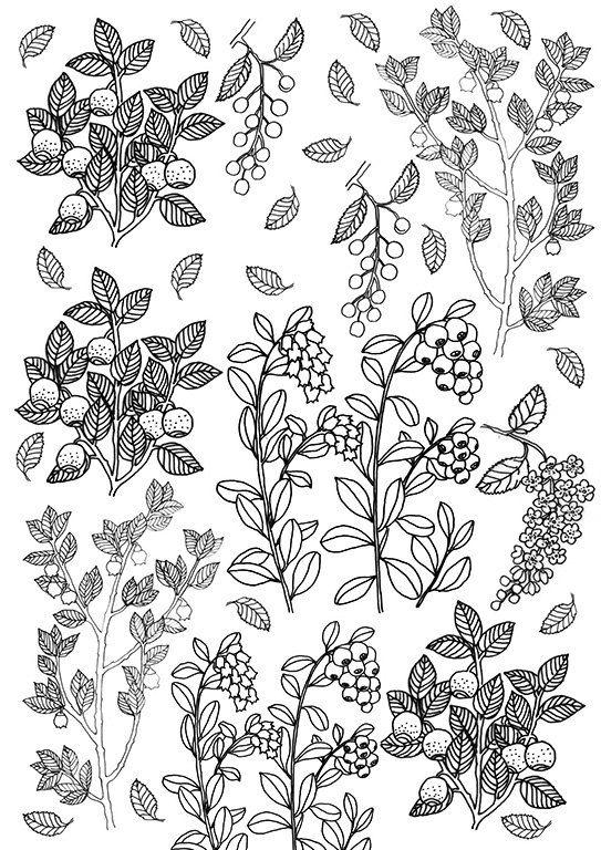 Berries And Leaves Coloring Sheet Printable Berries Instant