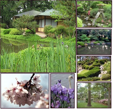 The Japanese Garden ~ Hermann Park ~ Houston, TX