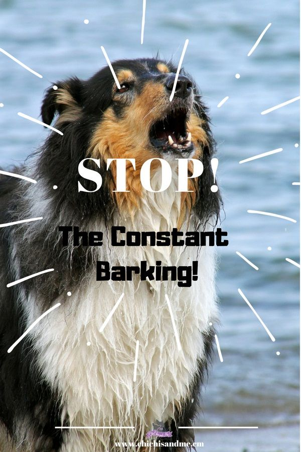 How To Stop That Annoying Constant Barking Stop dog