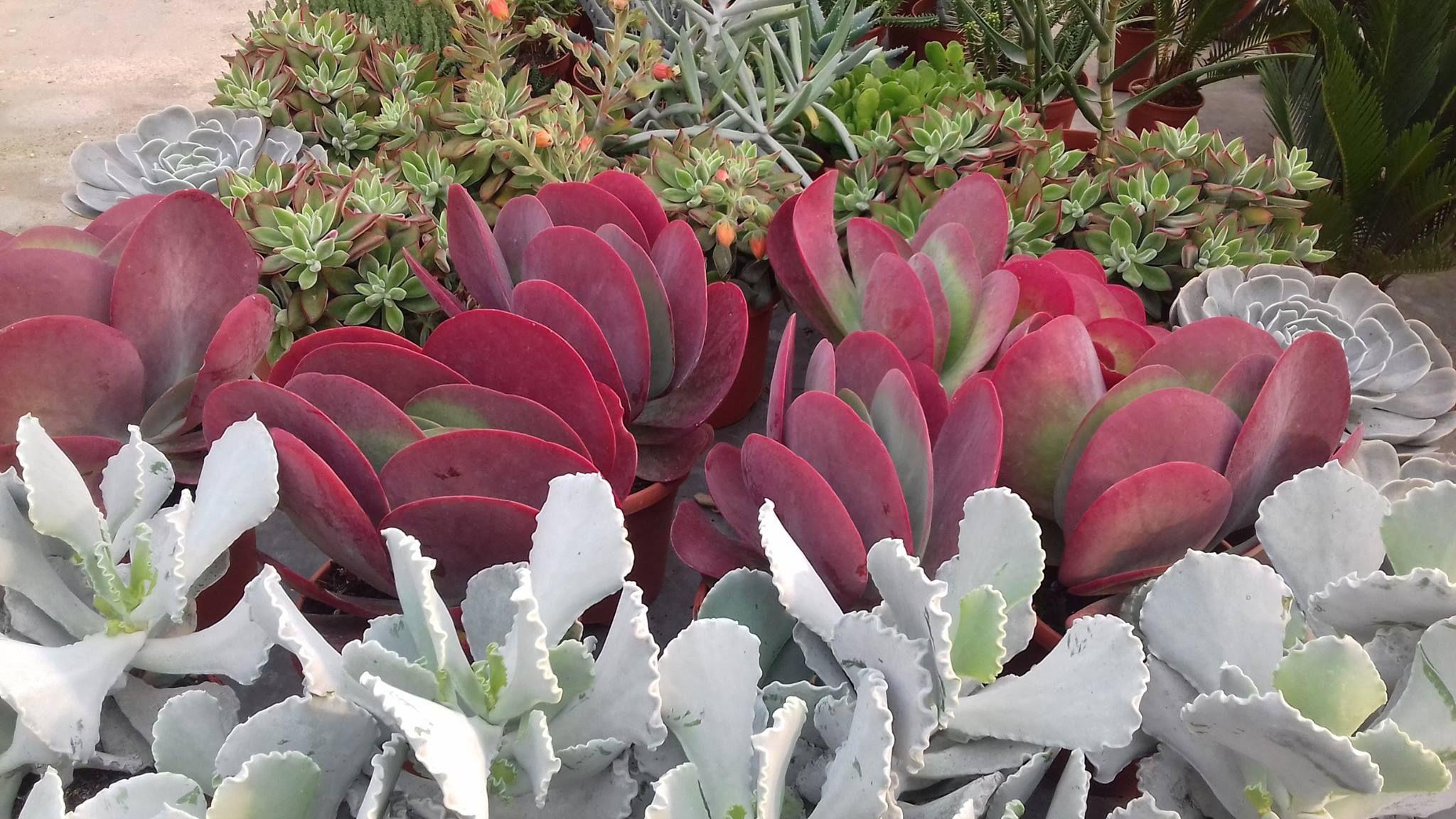 Le Temple Du Cactus Production De Plantes Grasses Pres De