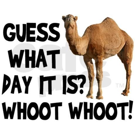 Guess What Day It Is Wednesday Hump Day Mid Week Funny Saying Mens T-shirt