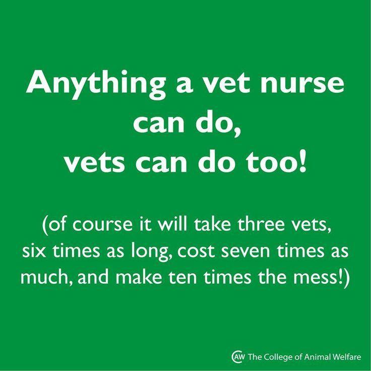 Anything a vet nurse can do vets can do too vetnurse
