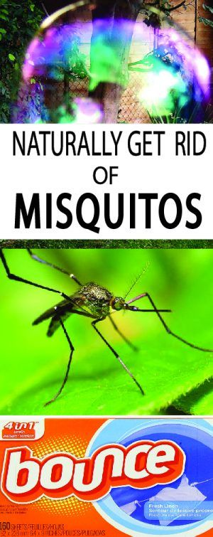 How to Get Rid of Mosquitoes | Gardening magazines, Oil ...