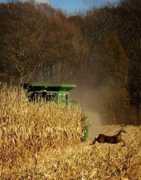 American Whitetail Deer Fleece Throw Blanket Fleece