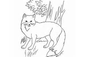 Free Coloring Pages Of A Jackal Yahoo Search Results Yahoo Image