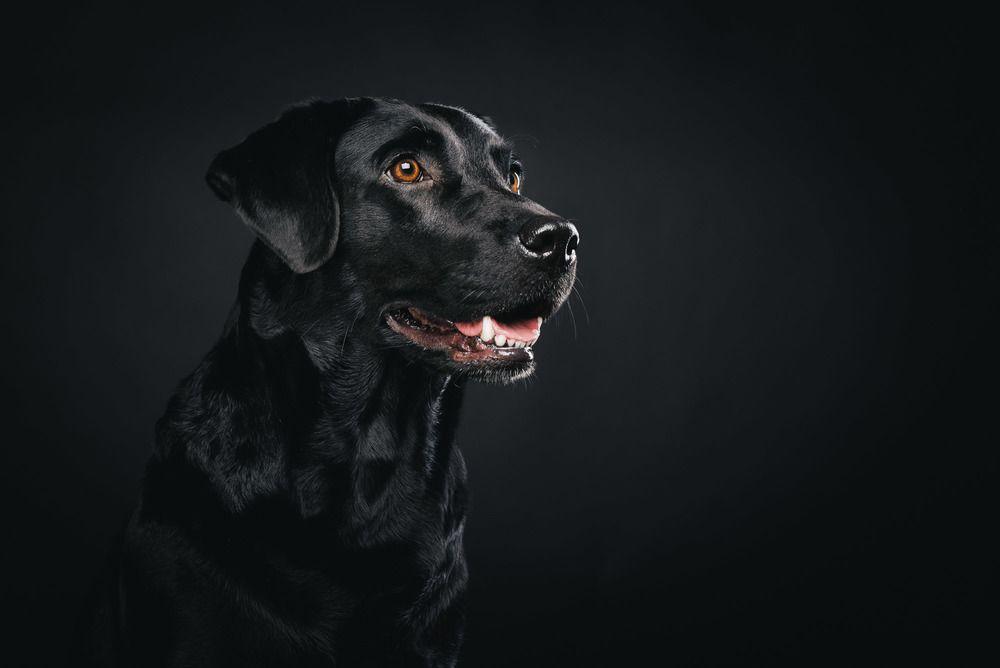 Pfotentick Hundefotografie Studio Shooting Juli Hund Weihnachten