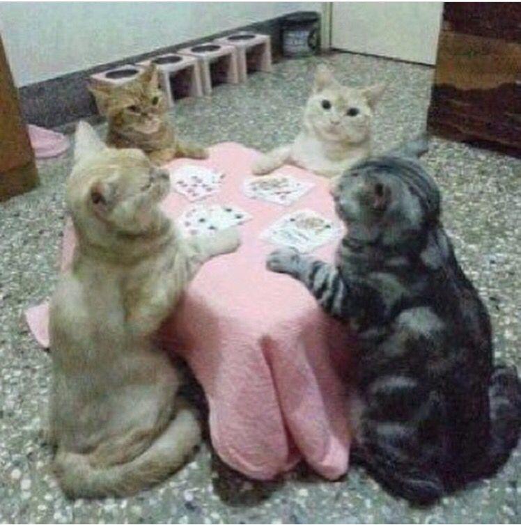 Gatos y juego