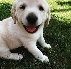 Resultado de imagen para fotos de perros hermosos