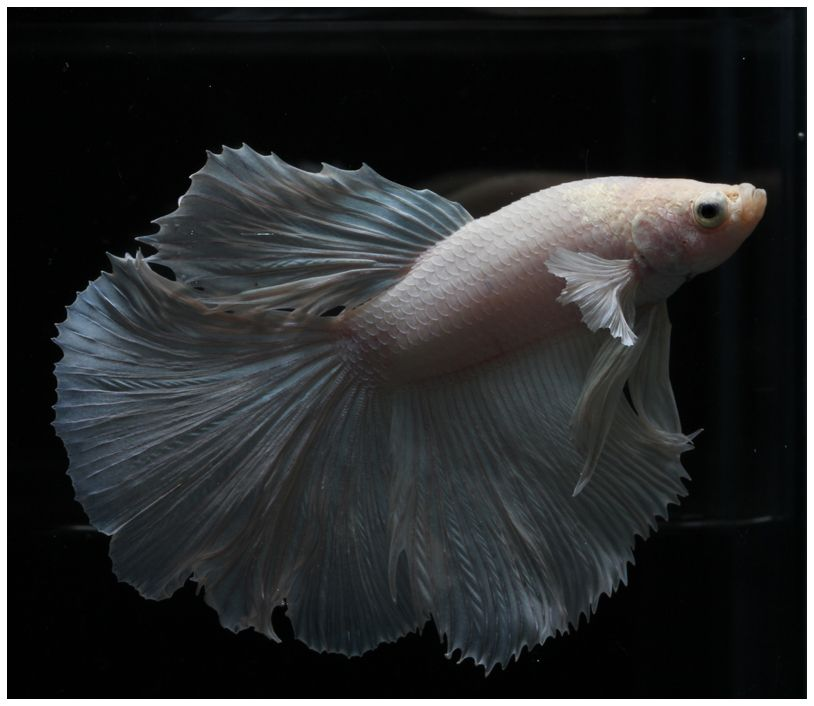 AquaBid.com - HM White Wedding Dress (HM0005)