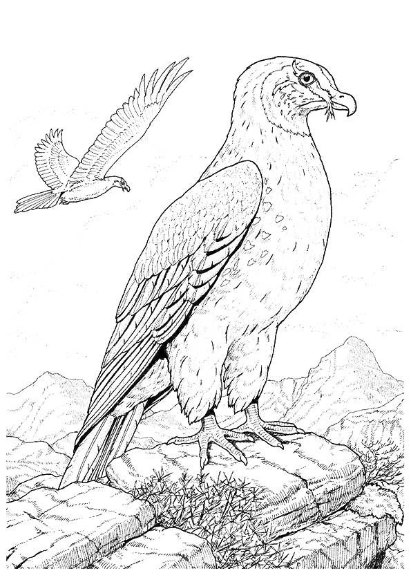 Print Coloring Image Momjunction Bird Coloring Pages Coloring Pages Animal Drawings
