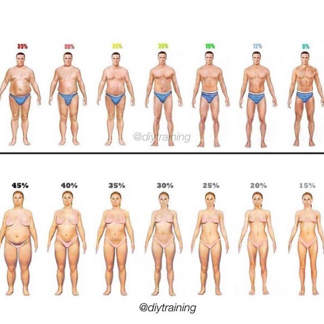 Body Fat Percent