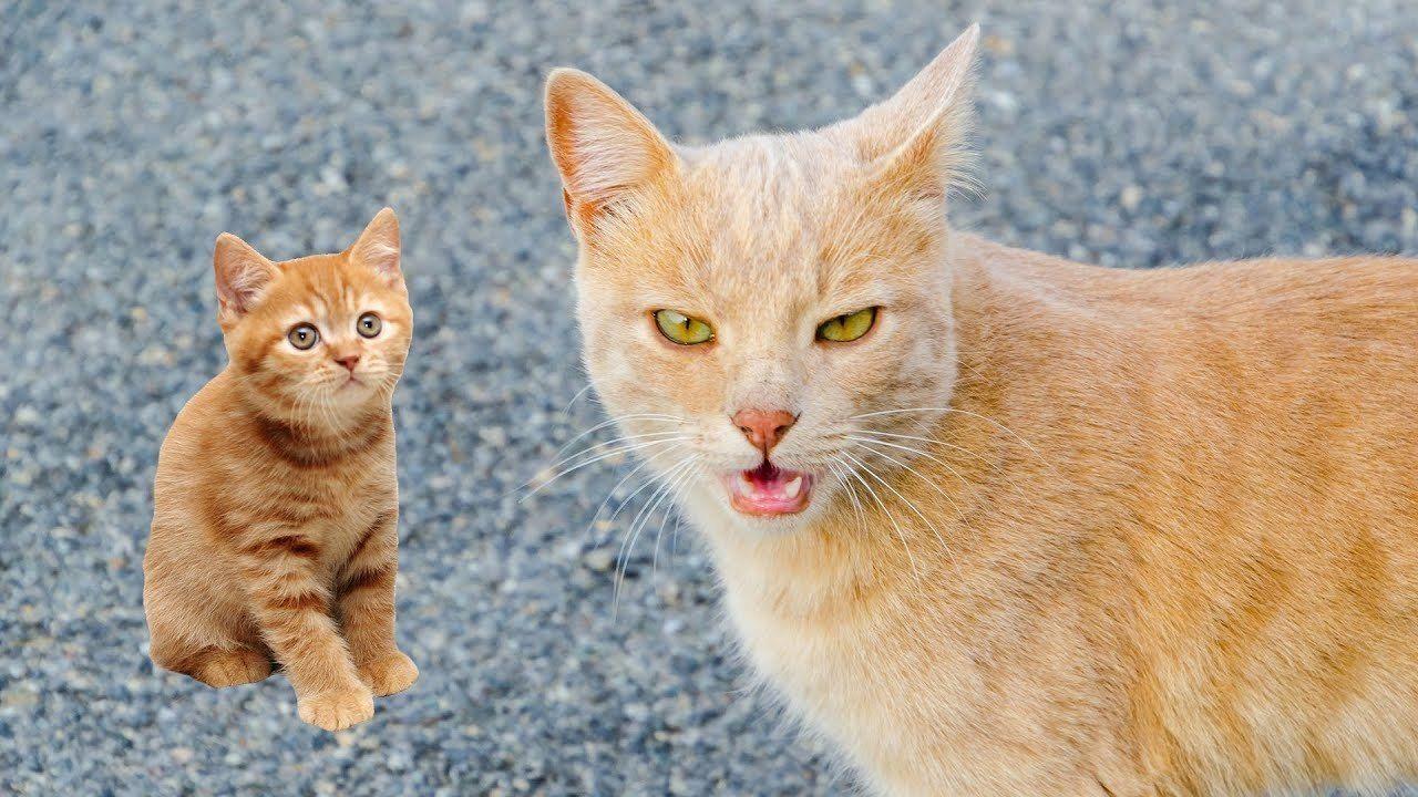 Dailyfunnypets Com Trend In 2020 Cute Cat Gif Kittens Cutest Cute Kitten Gif