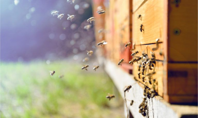 Bees contribute to sweet ending for superfund site cleanup