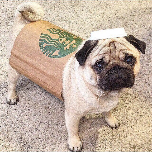 Starbucks Cup Cute Dog Costumes Cute Dog Halloween Costumes