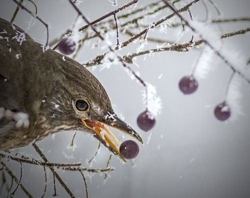 Hard Winter byAlexandru Andreescu
