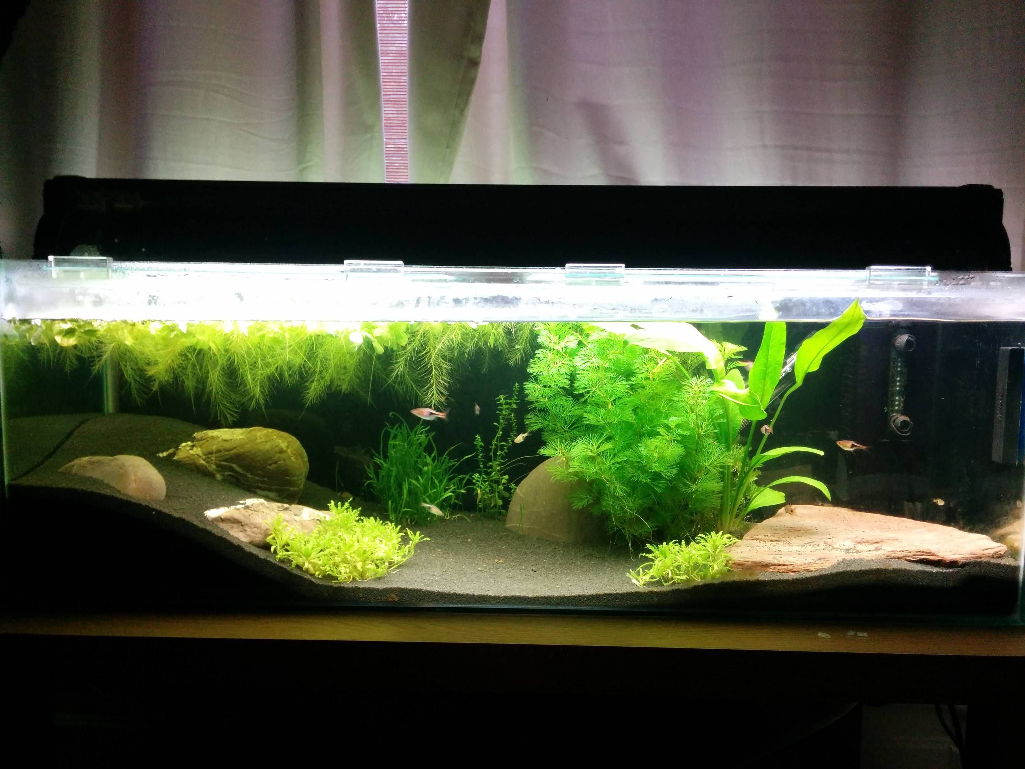 80l Planted Tank Planted Aquarium Fish Tank Aquascape