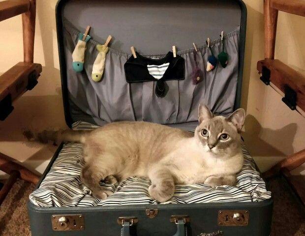 Cat suitcase bed