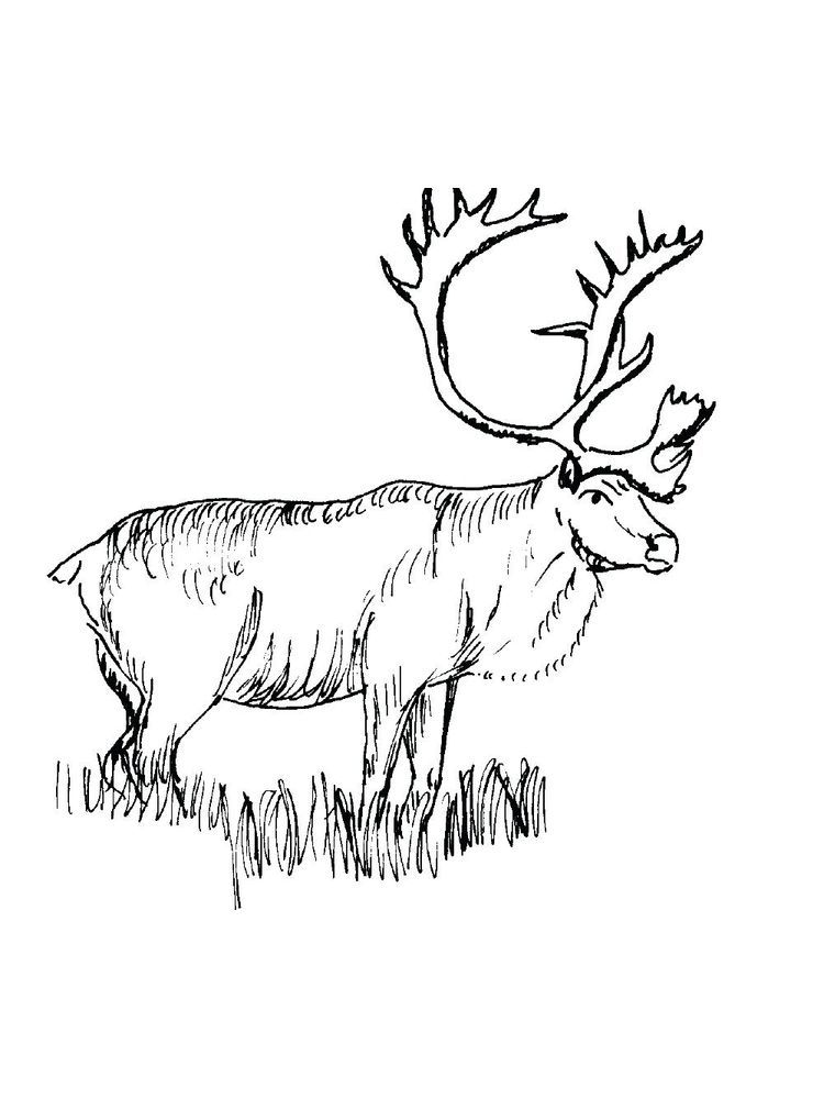 Elliot Moose Coloring Pages Animal Coloring Pages Coloring Pages Large Animals