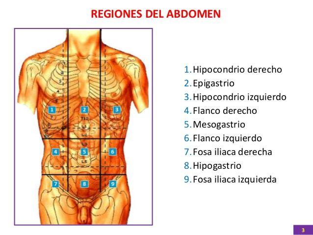 anatomia-humana-region-abdomen-3-638.jpg (638×479) | vcfdhuiii ...