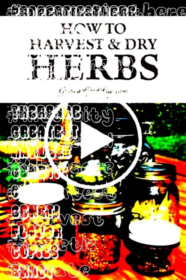 to dry herbs so that you can enjoy them all year Learn when to harvest and how to dry herbs for the greatest flavor intensity and medicinal propertiesThere are many ways...